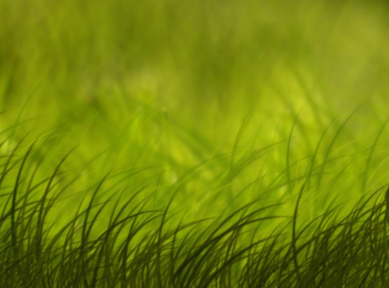 1404069405grass