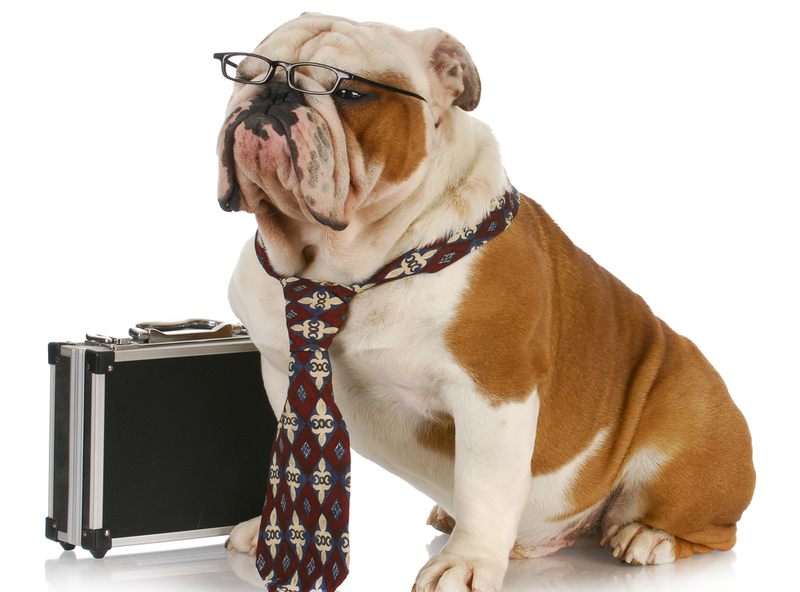1412101114dog-wearing-tie-with-briefcase