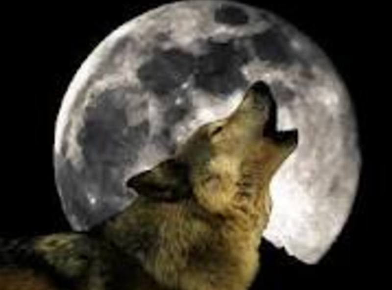 Wolf_howling_at_moon