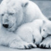 1399288643polar_bear_mom