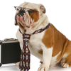 14127778671412101114dog-wearing-tie-with-briefcase